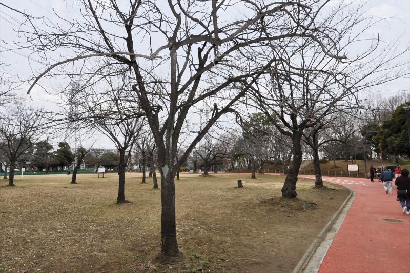 一ツ家第一公園