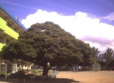 千葉市立高浜海浜小学校 450m